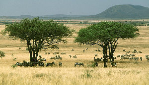 Human Evolution Savanna Two