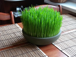 Wheatgrass Benefits Pot