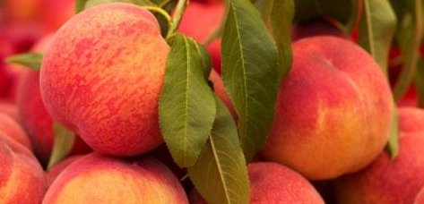 Fructose In Fruit Peaches