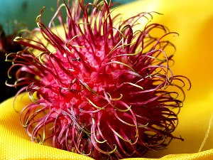 B12 Deficiency Rambutan
