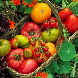 Growing Organic Food Heirloom Tomatoes