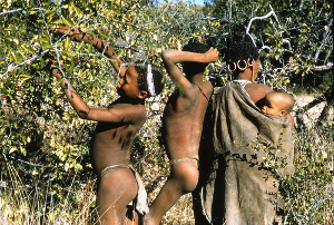 division of labor in the hunter gatherer society of the kung san bushmen O kung (bushmen) language kung san,  wants satisfied in hunter-gatherer society  a world in which capital is entrenched between culture and environment.