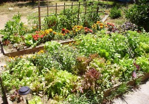 What Is A Raised Bed Garden