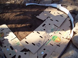 Raised Vegetable Garaden Cardboard